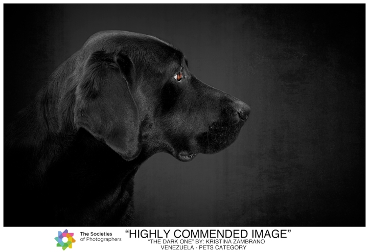 SWPP UK - 2015 | Highly Commended